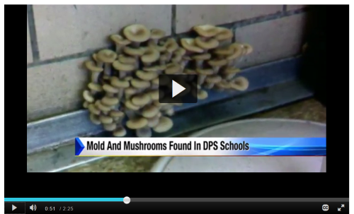 DPS mushrooms