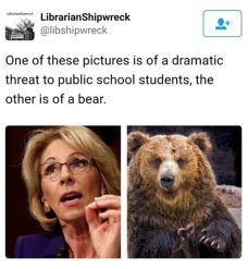 devos-vs-bear